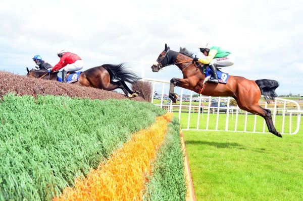 easyfix equine racecourse style chase fence